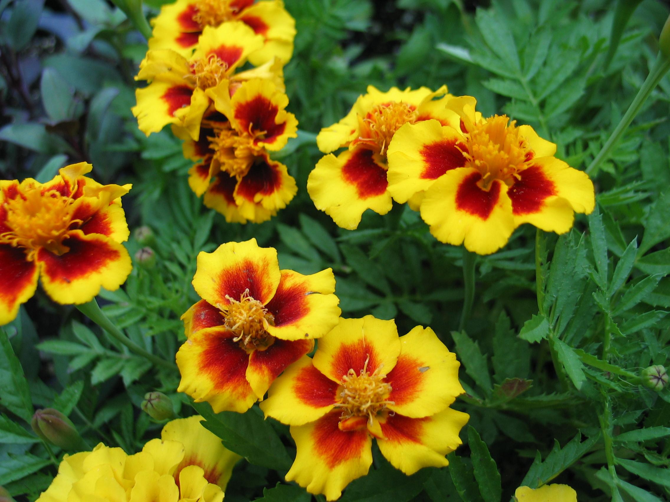 Rock meadow farm flowers izmirmasajfo Choice Image
